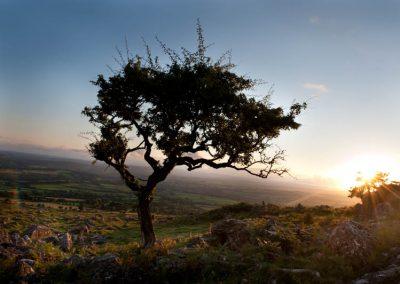 Tree dartmoor accommodation