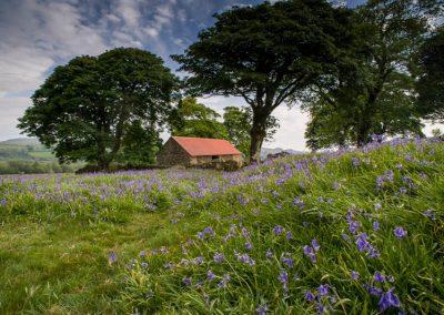 bluebells dartmoor accommodation