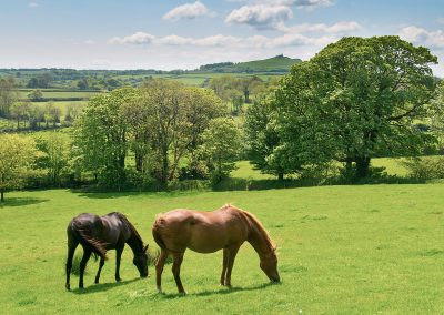 burnville-horses