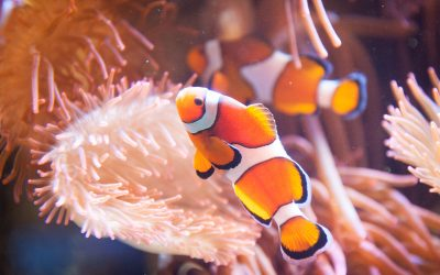 National Marine Aquarium's 20th birthday with free entry