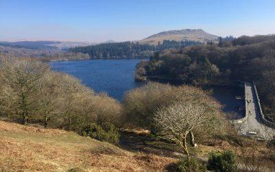 History of Trees on Dartmoor