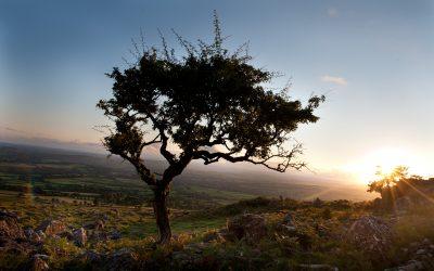 Nine months on Dartmoor