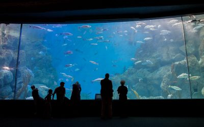 20 Years of the National Marine Aquarium